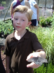 Kids LOVE the Butterfly Release at Carters Nursery Pond & Patio | Jackson Tn. 6/4/16