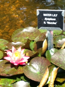 Learn about Aquatic Plants like Water Lilies, Lotus and more at this Seminar.