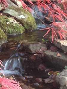 Learn what to do in the Fall & Winter to take care of your Water Garden.
