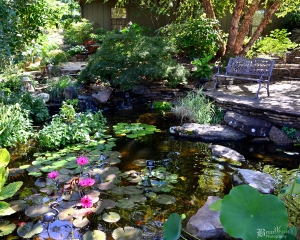 Tour beautiful Water Gardens & Ponds on the annual Pond Tour.
