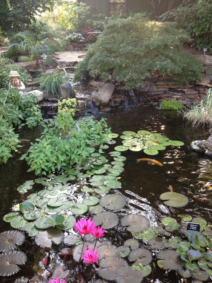 Fall pond help carter 39 s garden blog for Winter pond plants