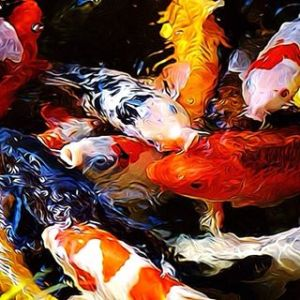 We will view & discuss pond fish, the most popular of course - Koi!