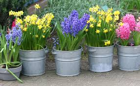Spring Flowering Bulbs must be planted in the Fall.