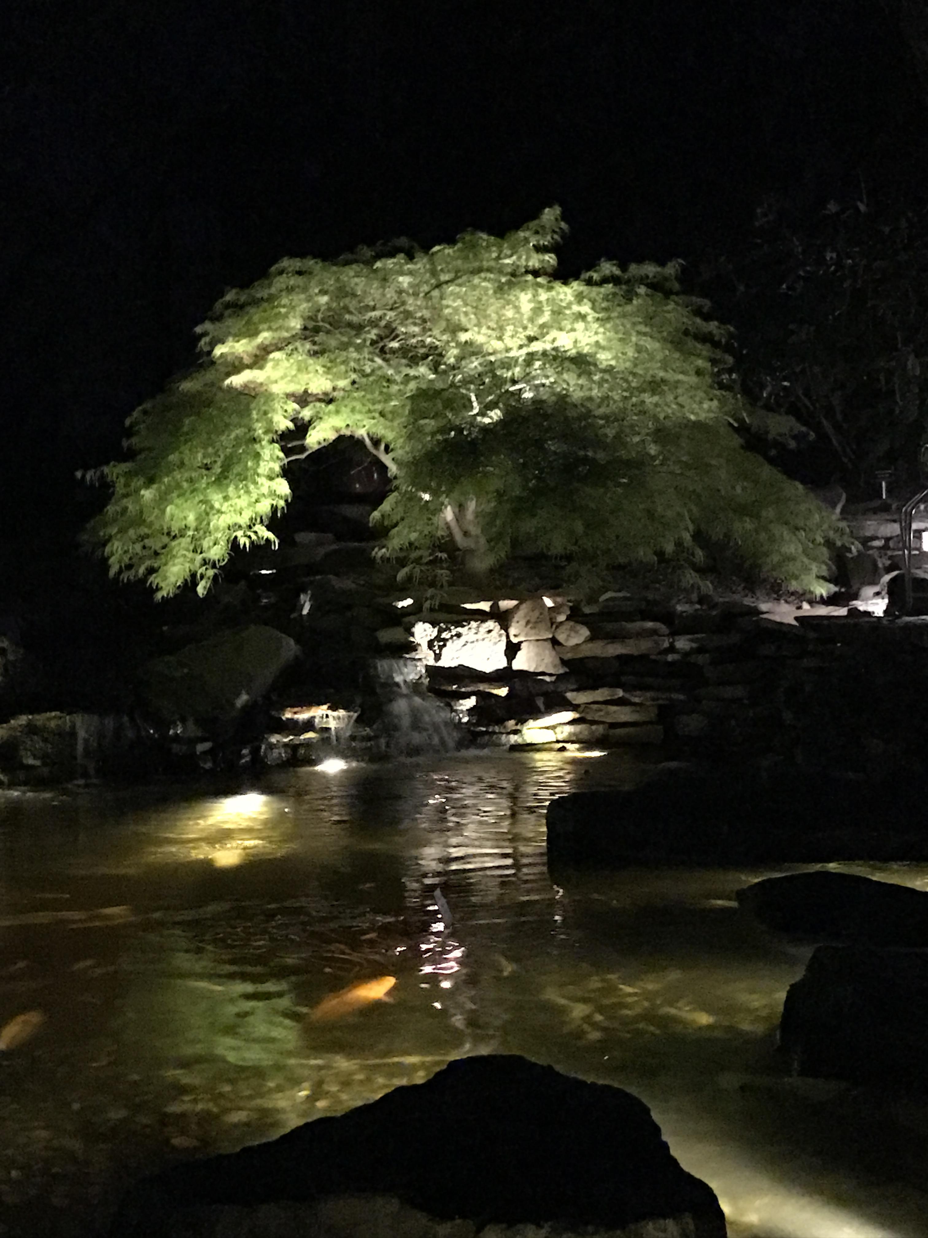 Pond Moonlight Night