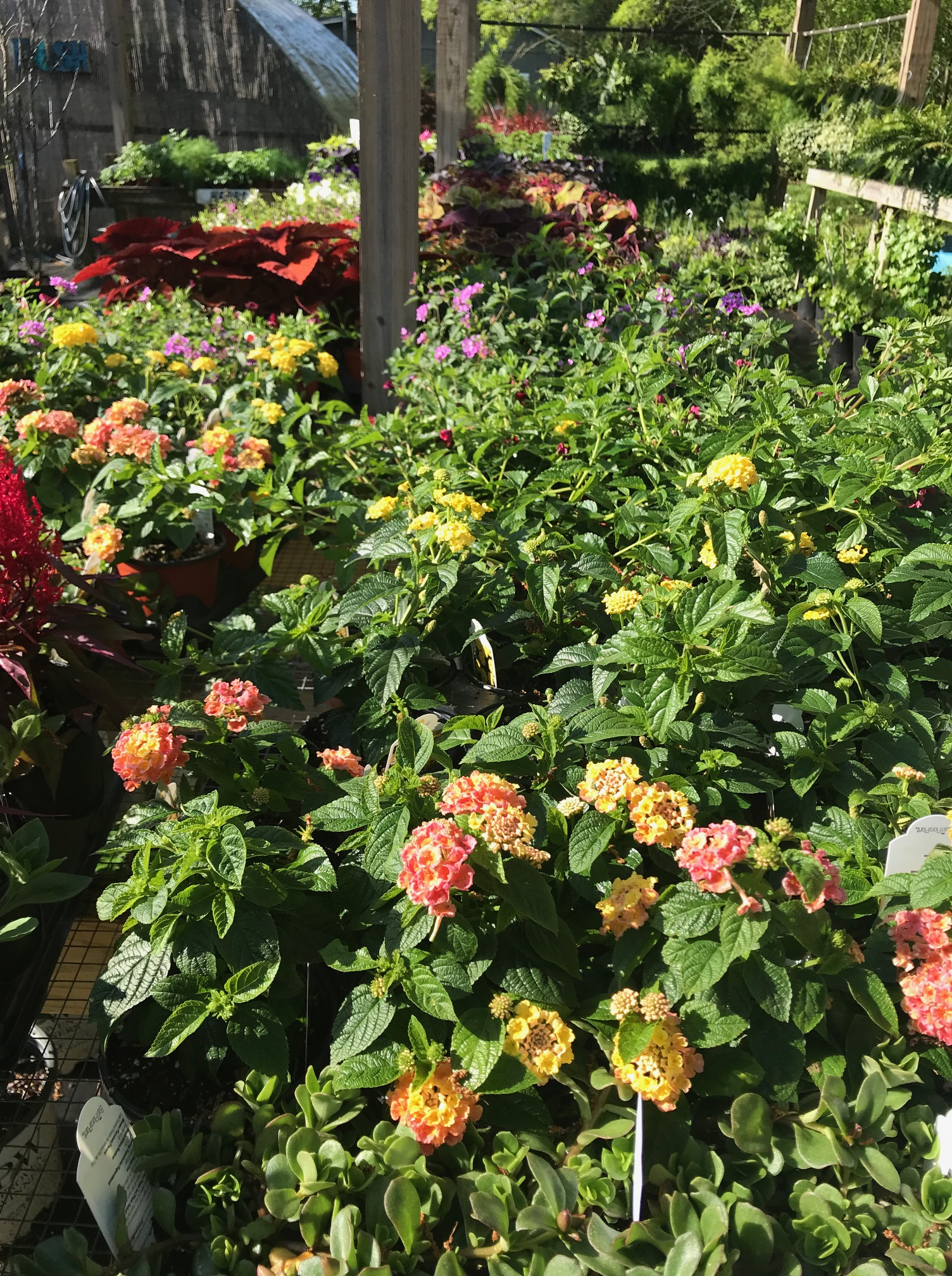 Come In For Special Deals On  Annuals, Perennials, Vegetables, Herbs,  Aquatic Plants, Etc. | Carters Nursery, Pond U0026 Patio | Jackson, TN